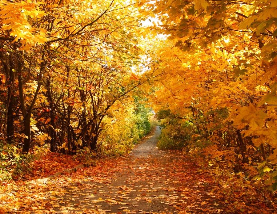 3 Tage Herbst Kurzurlaub Im Harz Mit Halbpension